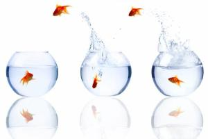 goldfish-3bowls